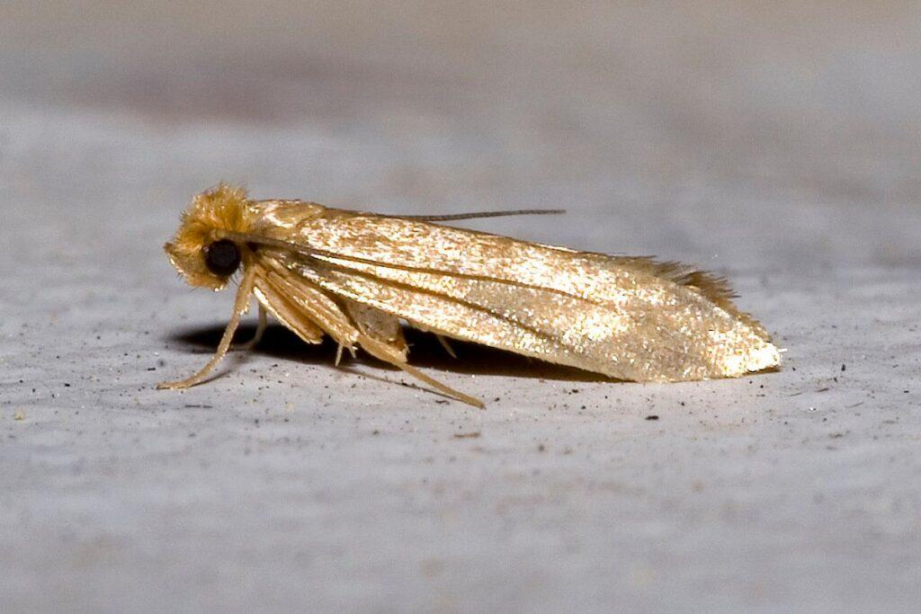 Moth Control Southend